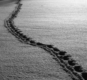foto av spor i snøen. brukt til illustrasjon i artikkel om sporing i erp-systemer.
